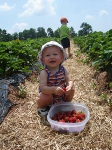 This cutie pie sure loves Weaver's Orchard Berries. Photo courtesy of Weaver's Orchard.