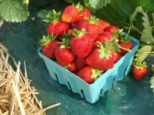 strawberry-picture-for-blog-two-300x224