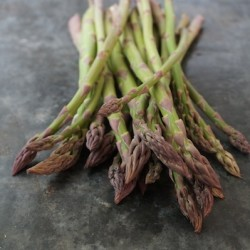 Homegrown Asparagus - 1 bunch. First of the season!
