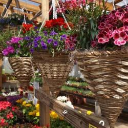 Garden Center Hanging Baskets