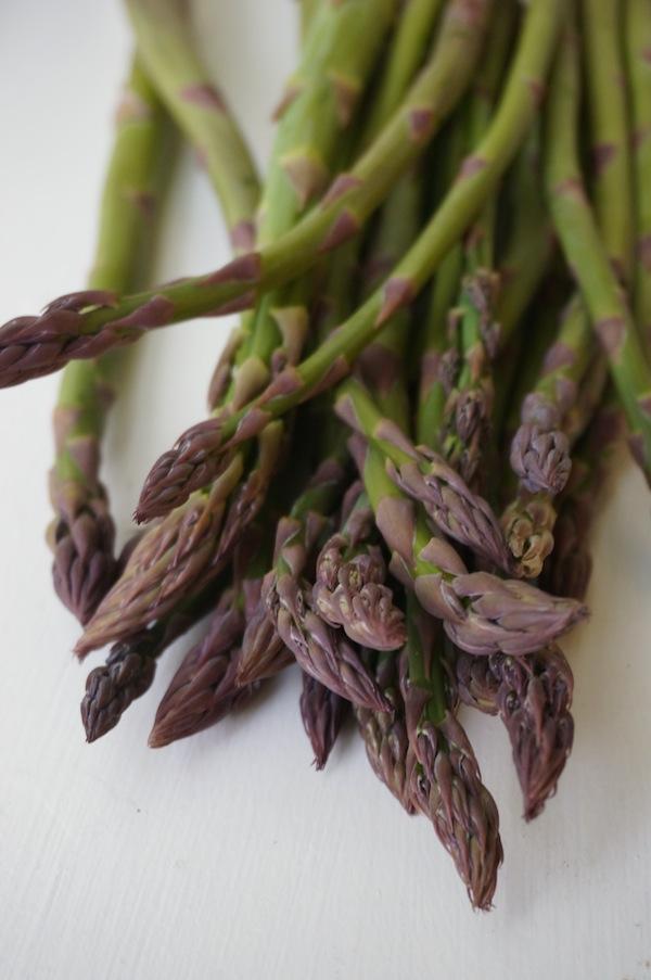 Asparagus-white background copy
