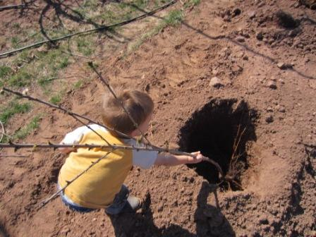 Even our two-year-old knows how to plant a tree!