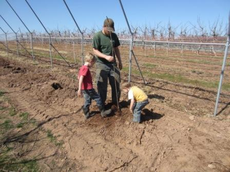 The finishing touch-- stomping the dirt around the tree!