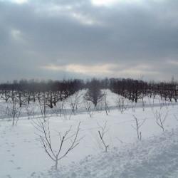 Mild Winter1