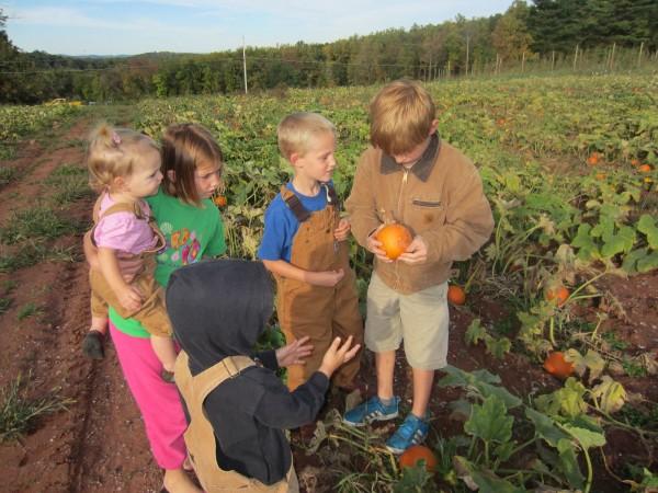 Pumpkin Picking2