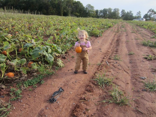 Pumpkin Picking3
