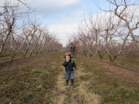 Our youngest son runs down the row of peach trees his daddy is pruning.