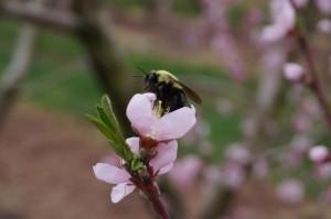 bee on bloom