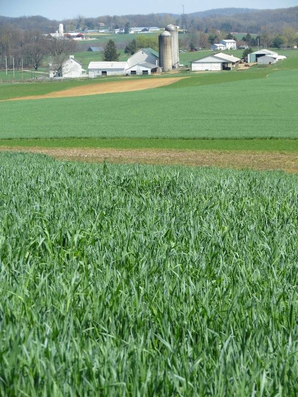Conebella Farm