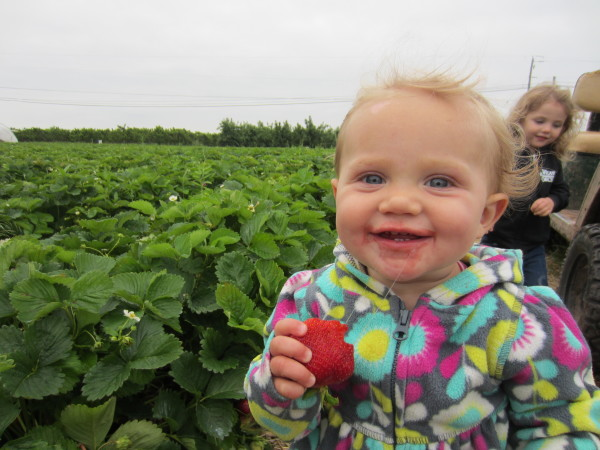 Unlimited strawberries for the baby!