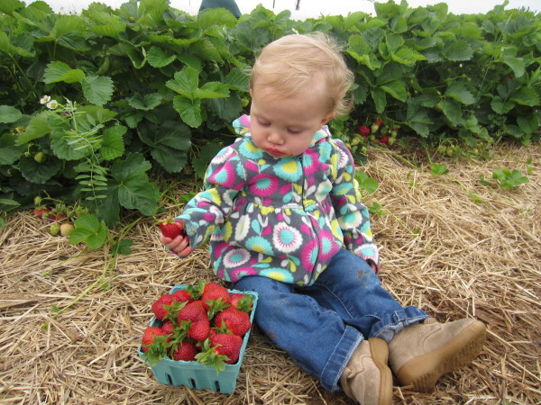 Berry picking for the baby