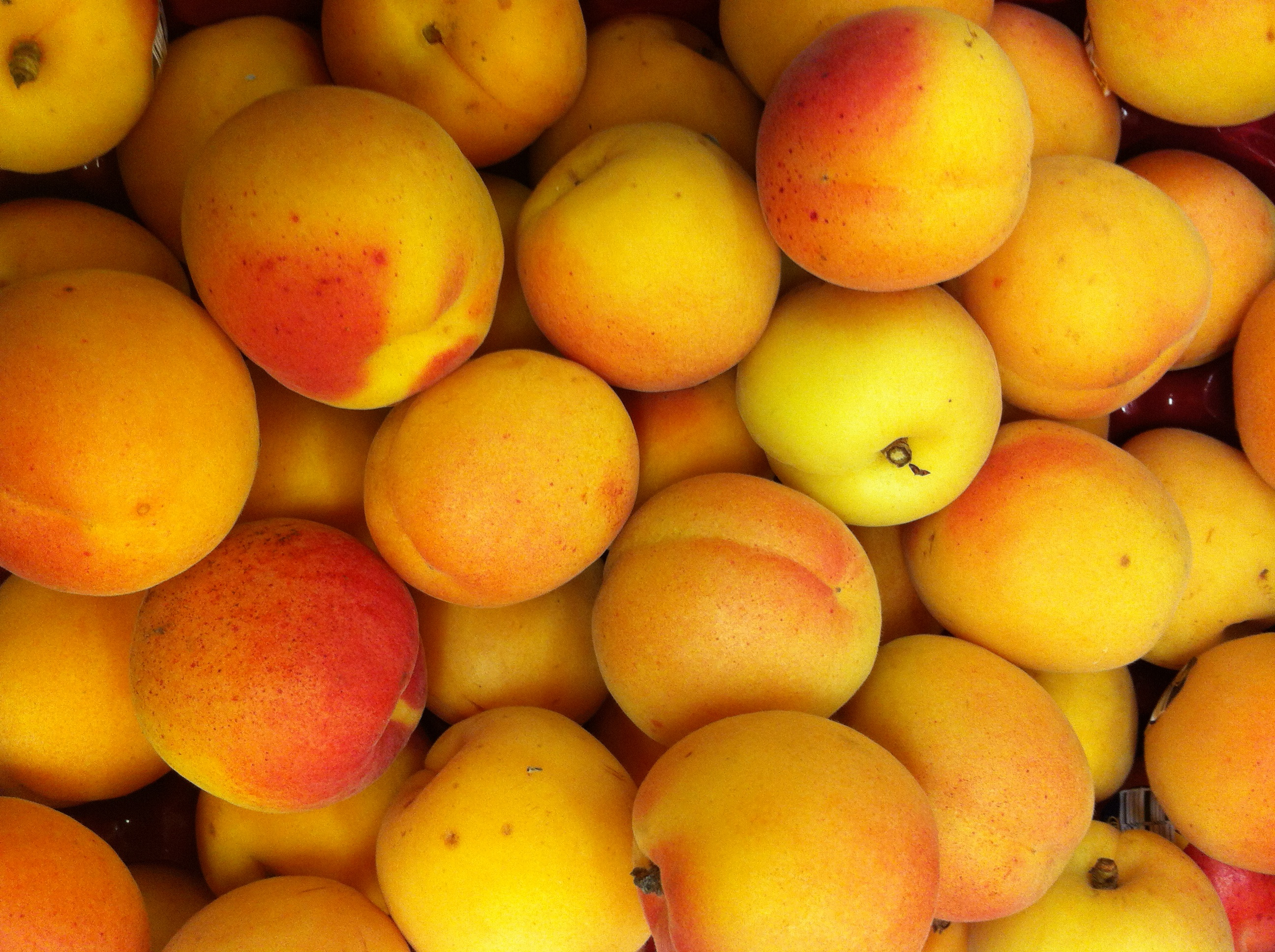 Image result for apricots