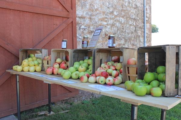 PA Apples2