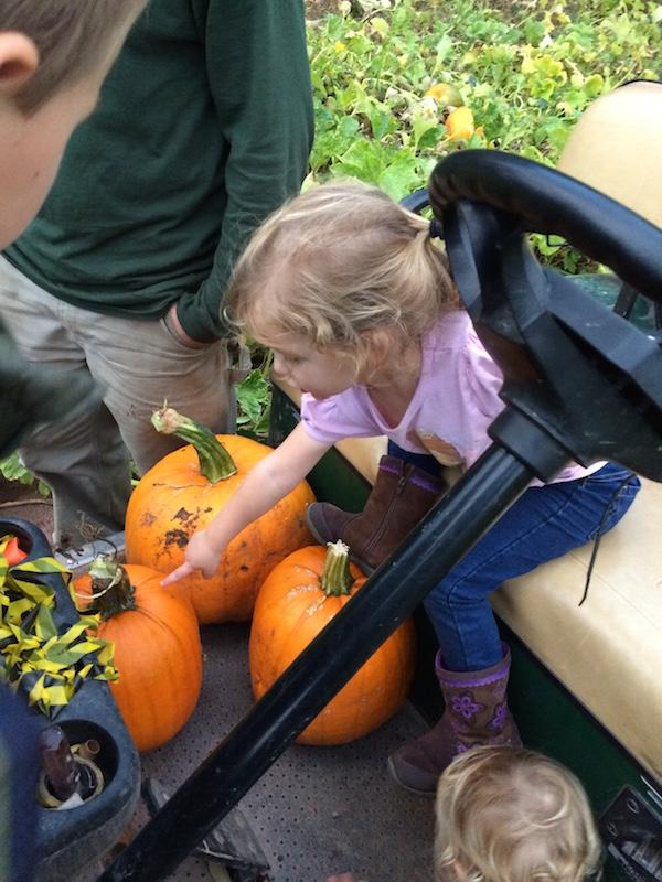 Golf cart and pumpkins