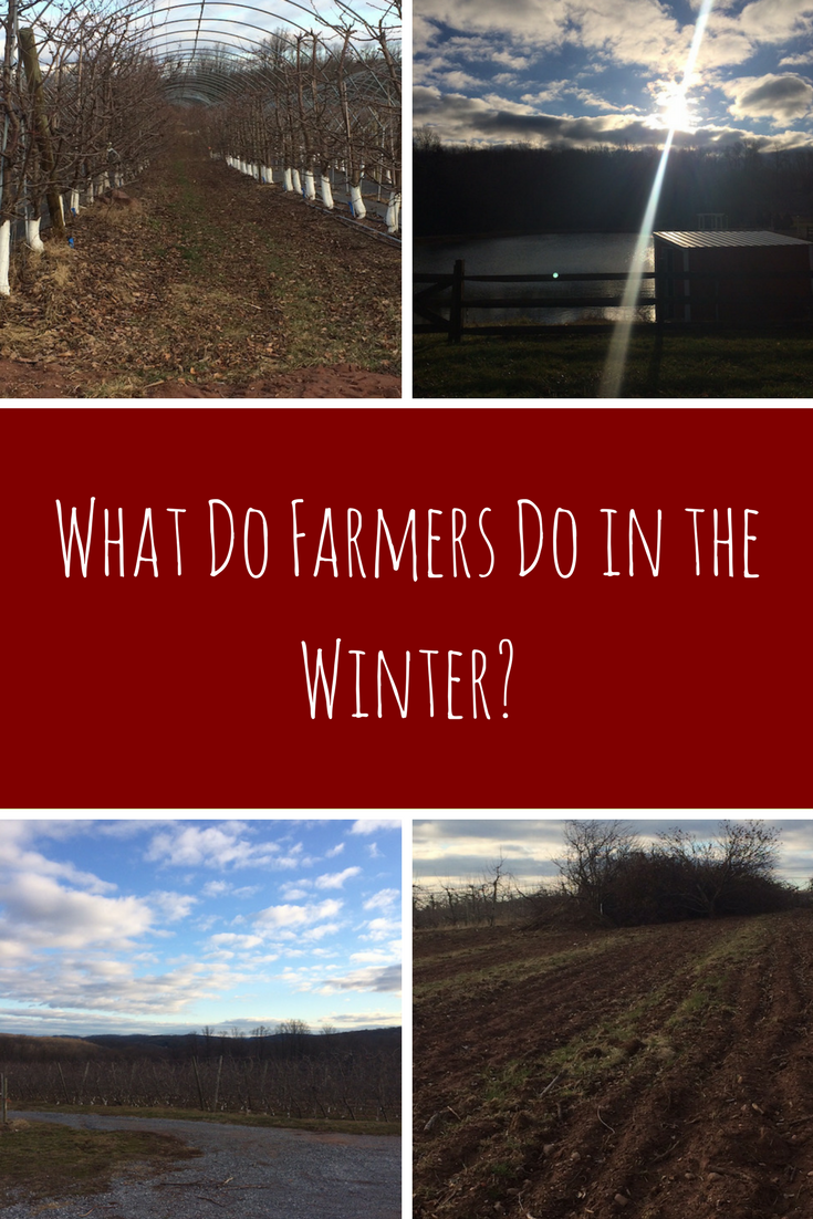 Ever wonder what farmers do while the ground is frozen and the crops aren't ripe?