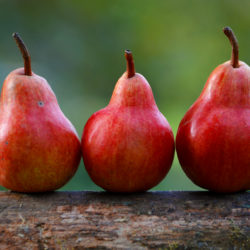 Red-Anjou-Pears