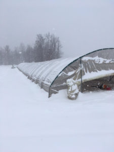 Snow on the high tunnels at Weaver's Orchard