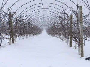 Snow on our High Tunnels