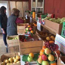 Fruit Basket Assembly 3