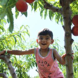 boy picking peaches