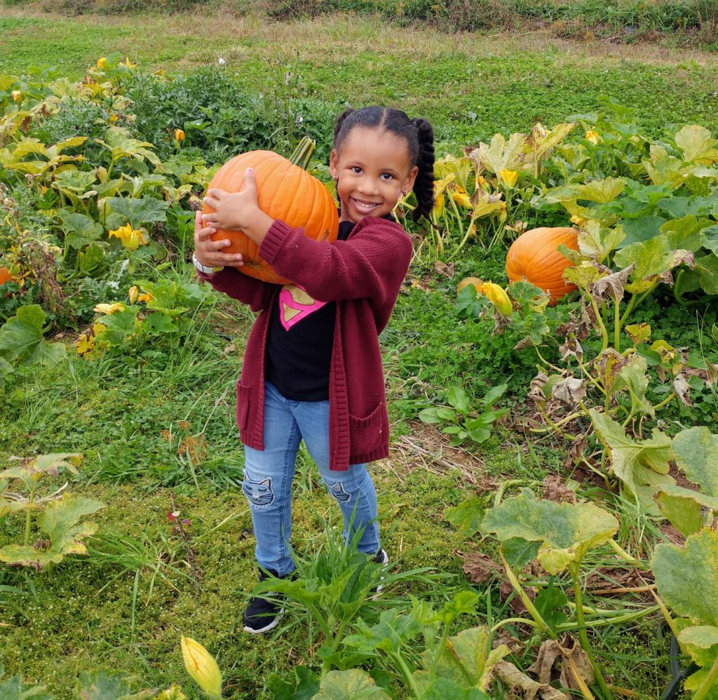Picking pumpkins at Weaver's Orchard