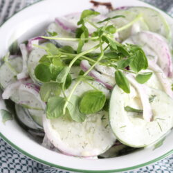 cucumberdill(1)